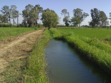 Filelds in Egypt - rice, irrigation, canal, egypt