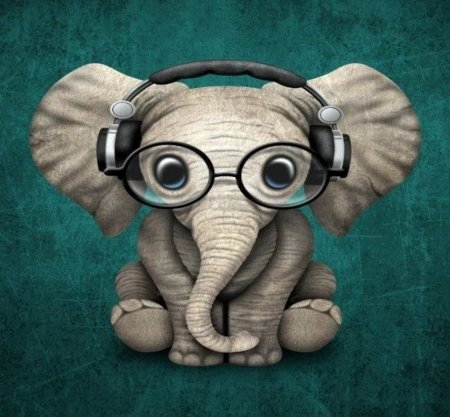 Elephant With Glasses - Glasses, Cute, Elephant, Animals