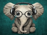 Elephant With Glasses
