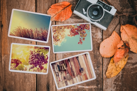 Autumn - fall, leaves, autumn, photos, camera