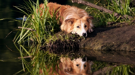 Perfect Place - resting, water, reflection, dog