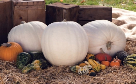 Albino Pumpkins Photography Abstract Background