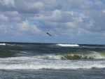 Sea Waves and Gull
