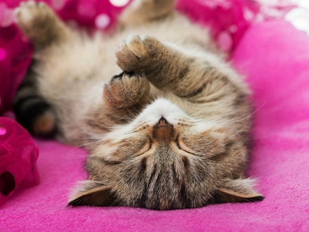 NAPPING CAT - CUTE, NAPPING, CAT, IMAGE