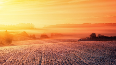 Frost - pretty, rural, dawn, warm, orange, agriculatural, dusk, cold, 4K, field, frost
