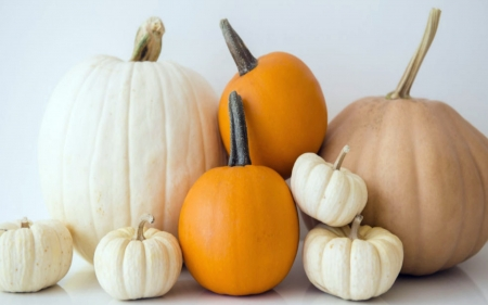 Pumpkins 1 Photography Abstract Background Wallpapers On