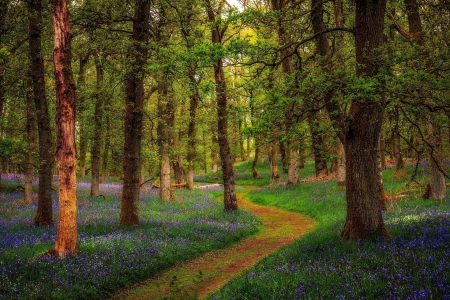 Pathway Thru Forest Of Purple Flowers Forests Nature