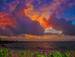 Coastal Flowers & Cloudy Sunset