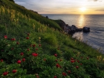 Wild flowers at the sunset