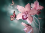 Pink orchids and butterfly