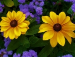 Yellow and purple,