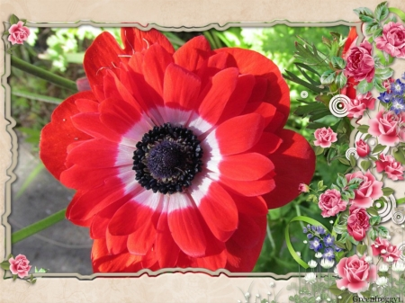 Pretty red flower flowers nature background wallpapers on pretty red flower mightylinksfo