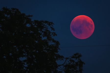 Blood Moon - nature, moon, space, blood