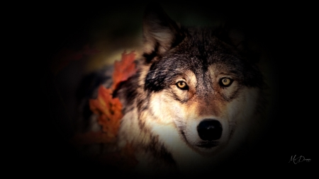 Fall Wolf Collage - lobo, Firefox theme, fall, autumn, leaves, wild, wolf, loup