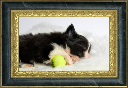 SLEEPING PUPPY - PUPPY, SLEEPING, CUTE, IMAGE