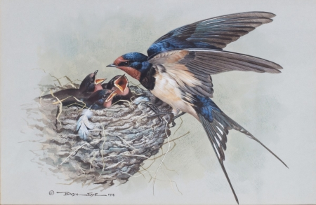 by Basil Ede - young, paint, bird, swallow