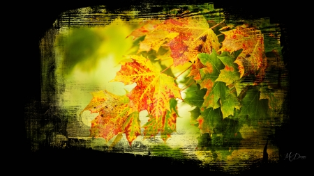 Autumn Leaf Collage - Firefox theme, fall, autumn, orange, collage, lake, leaves, gold, water, river