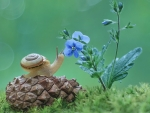 Snail, Cone and Flower