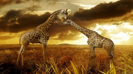Beautiful Giraffes IUCN Red List - Baby, IUCN RED LIST, Mother, Giraffes