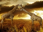 Beautiful Giraffes IUCN Red List