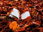 Book in Autumn Leafs