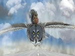 Flight With Owl Airplanes