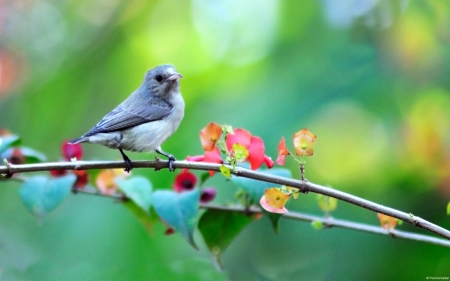Pretty Bird - flower, branch, bird, blue, colorful