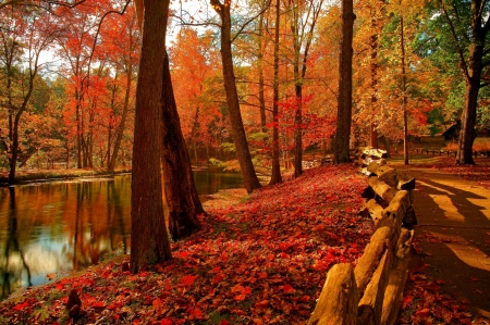 Forest park - Trees, Fence, Autumn, River, Forest