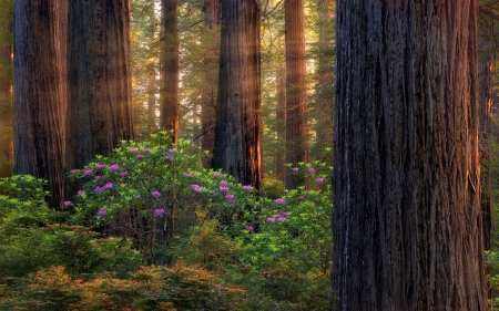 Forest of Purple Flowers and Sunbeams - Forests, Trees, Flowers, Nature, Sunbeams