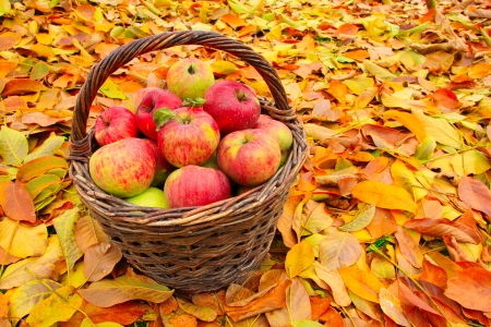 Autumn Apples Photography Abstract Background Wallpapers On Desktop Nexus Image 2418295