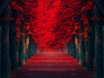 Red Road Forest