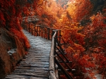 Wooden Walk way