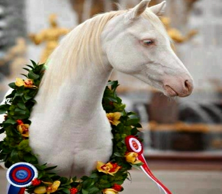 Albino Horses - White, Horses, Albino, Animals, Wreath