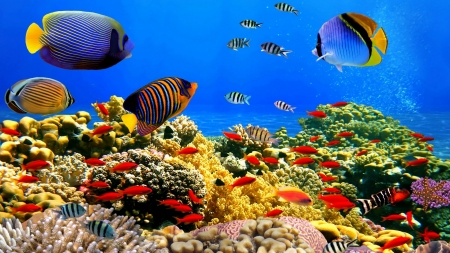 Underwater Life - Fish, Coral, Underwater, Life