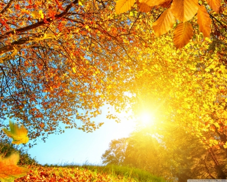 beautiful autumn day - forest, beautiful, autumn, nature, day