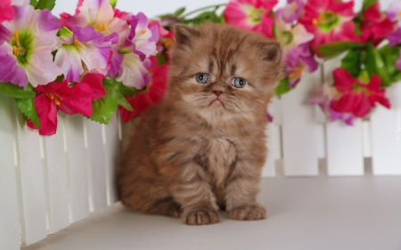 so sweet kitty - cats, animals, sweet, photography, cool, flowers
