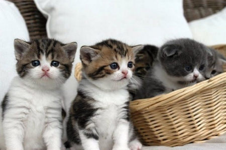 cute kittens - kittens, cute, cats, animals