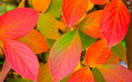 Autumn Colours - autumn, peach, orange, leafs, colours, green, red, leaves