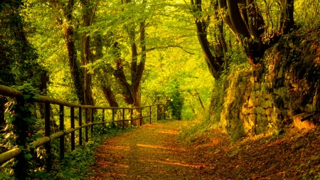 Pathway in the autumn - Fall, Trees, Branches, Pathway, Trunks, Leaves, Fence, Autumn