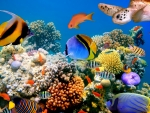 Colorful Life under Water