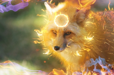 Firefox - frumusete, fantasy, 0l fox l0, vulpe, fox, luminos, orange, firefox