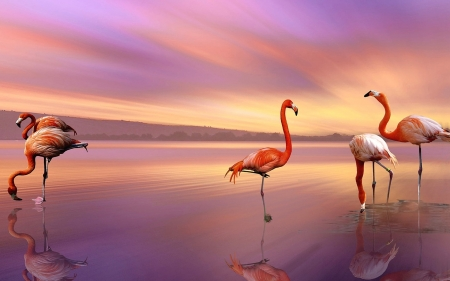 Flamingos in the sunset - Water, Sky, Birds, Sunset
