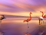 Flamingos in the sunset