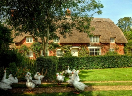 English House With Swans - Beautiful, Swans, English, House