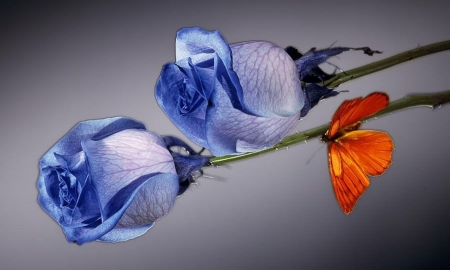 blue roses - nature, blue, still life, cool, flowers, roses