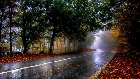 Raining Fall Cold Day Forests Nature Background Wallpapers On Desktop Nexus Image 2420494