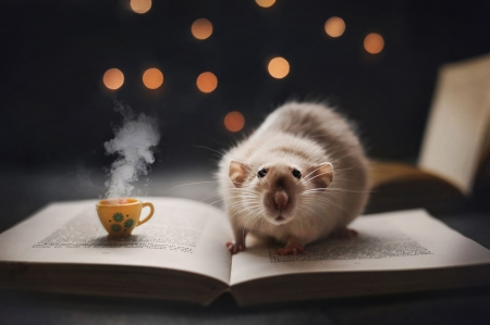 :-) - rodent, animal, bokeh, book, rat, cup