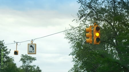 Traffic Light & Tree - traffic light, left turn only arrow, tree, amber, yellow, blue sky, clouds