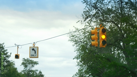 Traffic Light & Tree - left turn only arrow, tree, amber, yellow light, yellow, blue sky, clouds, traffic light, amber 1ight