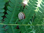 Snail on Fern